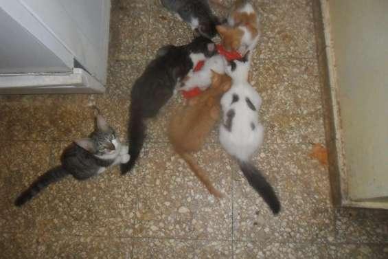 Gatitos para adoptar