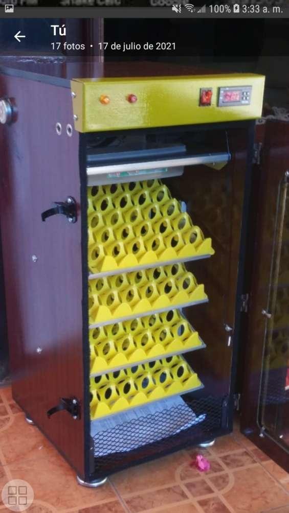 Incubadoras 8097660926 de huevos en moca